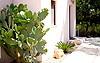 Kaktus an der Südseite